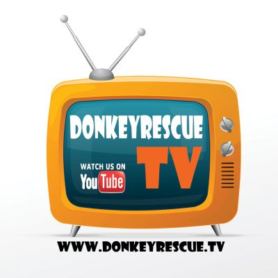 donkeyrescue tv