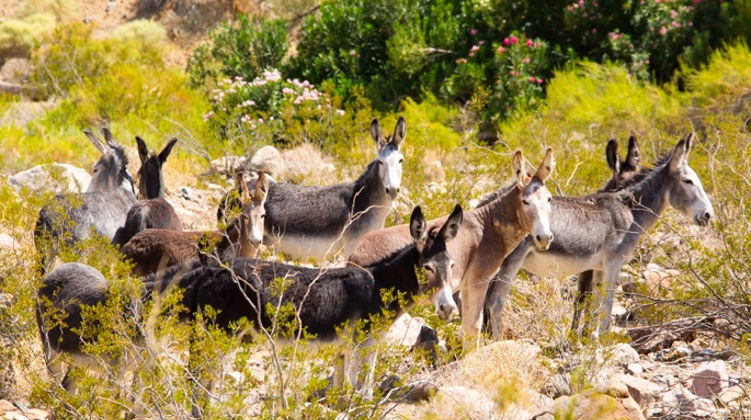 Peaceful Valley Donkey Rescue Home
